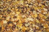 The autumn has come — Стоковое фото