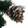 Christmas tree with cone isolated on whi - Stok fotoğraf