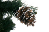 Christmas tree with cone isolated on whi — Stock Photo