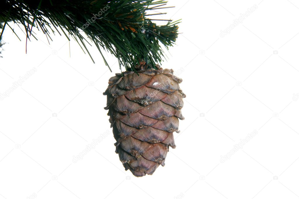 Christmas tree with cone isolated on white  Stock Photo #1023597