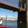 Classical NY -seagulls beside Brooklyn b — Stock Photo