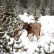 Deer in winter deep forest — Stock Photo #1067226