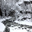 Stock Photo: Winter season in Yellowstone National Pa