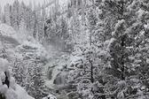 Winter trees in snow — Stock Photo