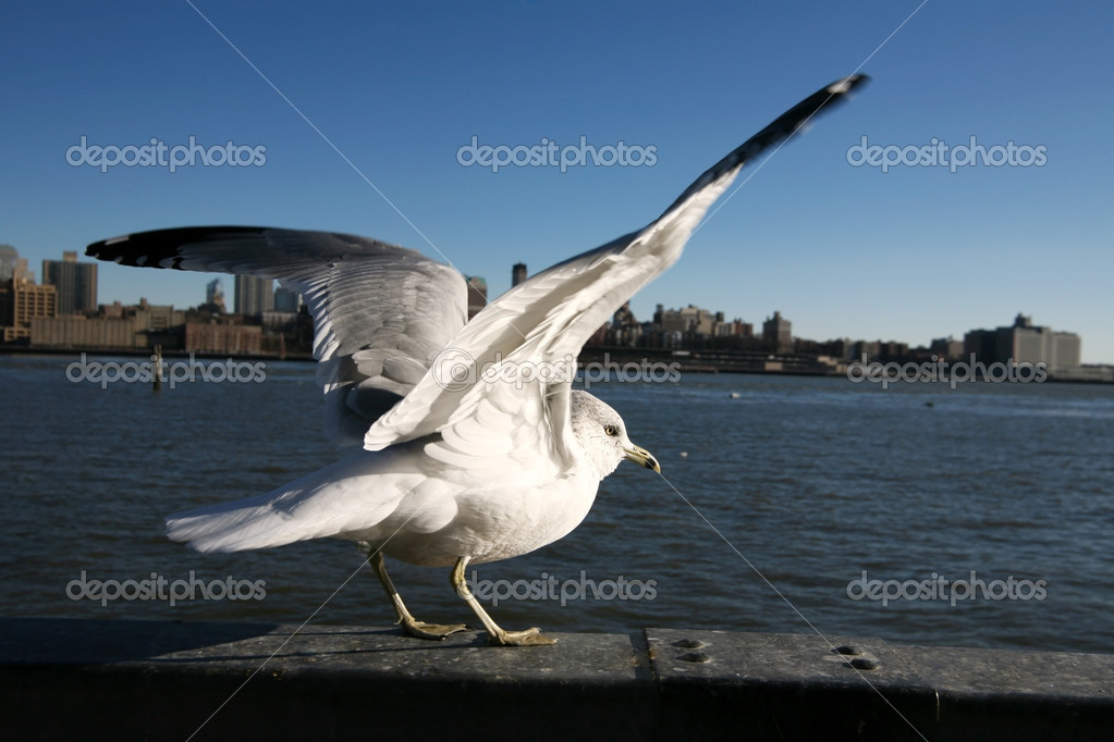 Seagull in Manhattan — Stock Photo #1062653