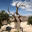 Stock Photo: Tree in the Grand Canyon, Arizona, USA