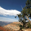 Grand Canyon, Arizona, USA — Stock Photo