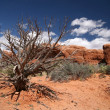 Dead tree in Arches National Park, Utah, — Stock Photo