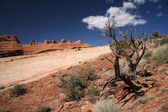 Dead tree and Rocks, Arches National Par — Stock Photo