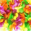Hawaiian colorful flowers — Stock Photo