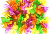 Hawaiian colorful flowers — Stock Photo