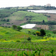 Photo: Classical view to rural area in Sicily