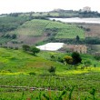 Classical view to rural area in Sicily — ストック写真