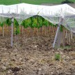 在西西里,农村地区的葡萄园 — 图库照片