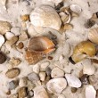 Sea Shells in sand — Stock Photo