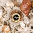 Sea Shells and Compass on sand — Foto Stock