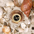 Sea Shells and Compass on sand — Foto de Stock