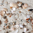 Sea Shells and stones in sand — Stock Photo