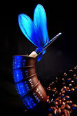 Blue dragonfly at beans of coffee — Stock Photo
