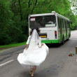 Run Away Bride to bus - Stock Photo