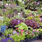 Flowers shop. — Stock Photo