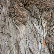 Royalty-Free Stock Photo: Tree bark texture.