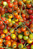 Tomatoes cherry — Stock Photo