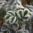 Stock Photo: Autumnal frost