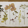 Herbarium. - Stock Photo