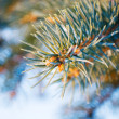 Spruce branch — Stock Photo #1635483