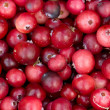 Background from cranberry berries. — Stock Photo
