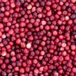 Fresh cranberry. — Stock Photo