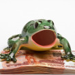 Ceramic frog on a pile of five-thousandt — Stock Photo