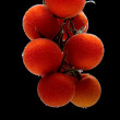 Royalty-Free Stock Photo: Branch of tomatoes cherry