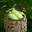 Wattled basket with vegetable marrows. — Stock Photo