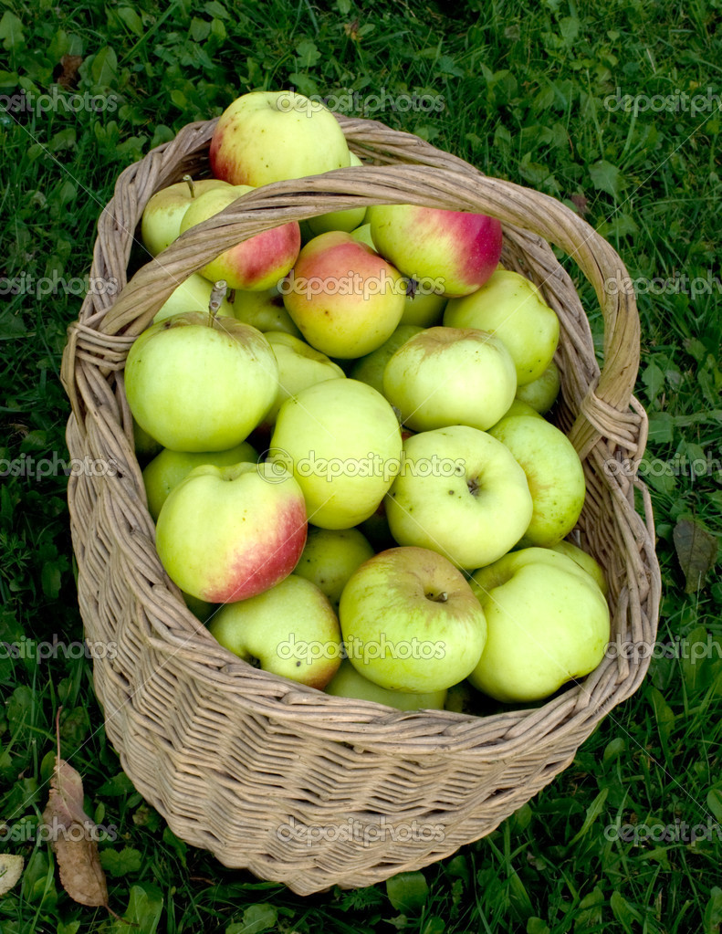 Wattled basket with a crop of apples on a green grass. — Stock Photo #1032303