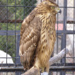 ������, ������: The bird of prey