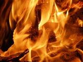 The bonfire — Stock Photo