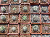 The cactuses — Stock Photo