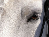 Eyes of the horse — Stock Photo
