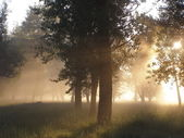 Dawn in the forest — Stock Photo