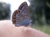 Butterfly on the skin — Stock Photo