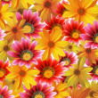 Flower background — Stock Photo #2027544
