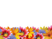 Květinový rámeček 2 — Stock fotografie