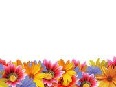 Marco de flores 2 — Foto de Stock