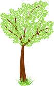 绿色的树叶和草美树 — 图库矢量图片