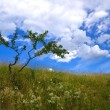 Green bush against the blue sky — Stock Photo