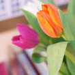 ������, ������: Spring Tulips