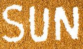 Sunflower seeds with written word sun — Stock Photo