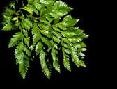 Fern leave with water drops — Stock Photo